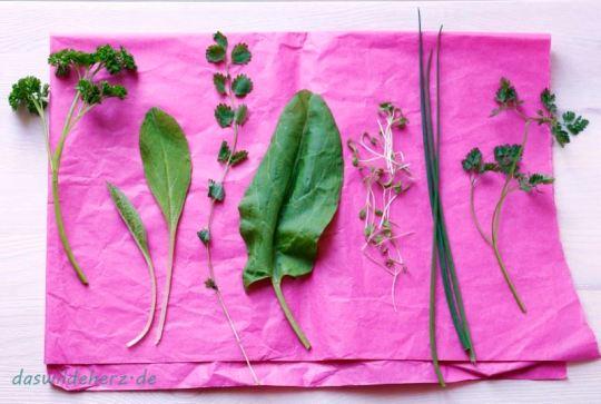 Willst du grüne Soße machen, musst du haben sieben Sachen: krause Petersilie, Borretsch, Pimpinelle, Sauerampfer, Kresse, Schnittlauch und Kerbel