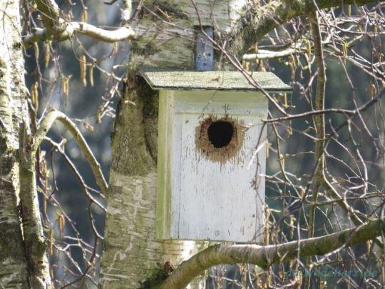 Ganz schön heruntergewohnt: Hier haben sich schon Generationen von Vögeln dran abgearbeitet