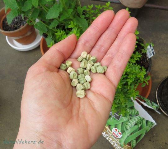 """Poesie auf der Samentüte! """"Wunder von Kelvedon"""" heißt diese Erbse. Ich musste nachschauen: Kelvedon liegt in England"""